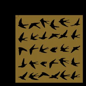 birds 5x5